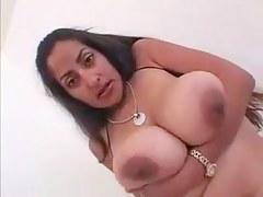 Large Tit Indian Vanessa