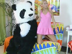 Panda bear in sex knick-knack porn movie